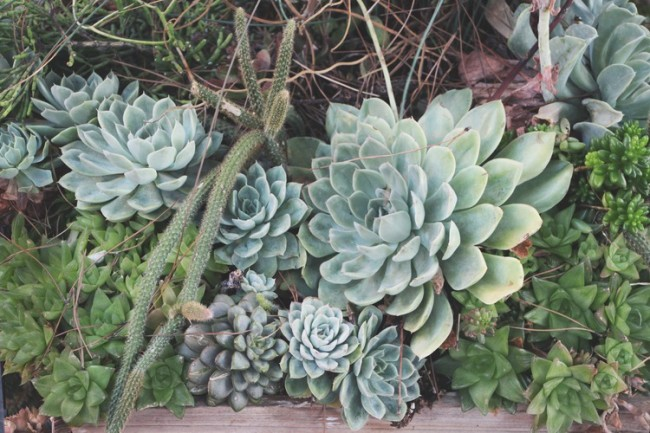 cacti-succulents-old-town-san-diego-california