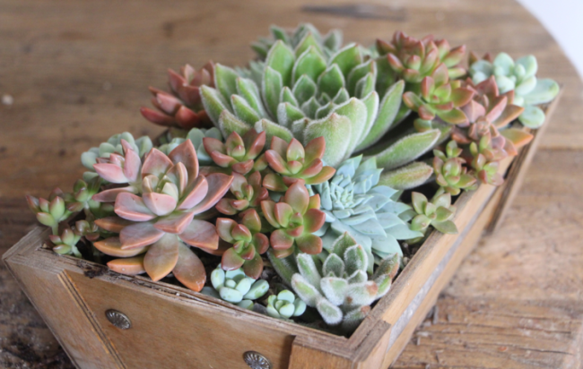 how-to-arrange-succulents-needles-and-leaves-needlesandleaves_net